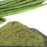 Moringa leaf / fruits powder (saragavo)